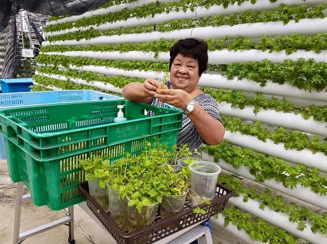 Urban_farming